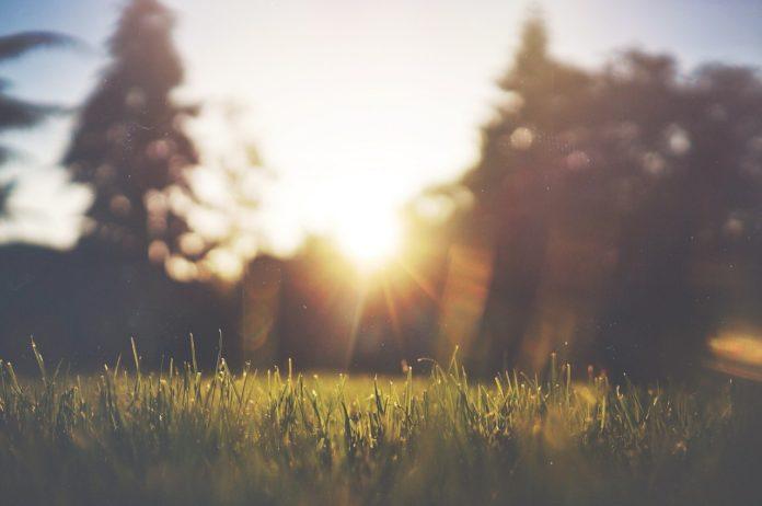 Etwas Neues genug ᐅᐅ】Rasennmähen mit der Sense ᐅ Gartenscout #IX_71